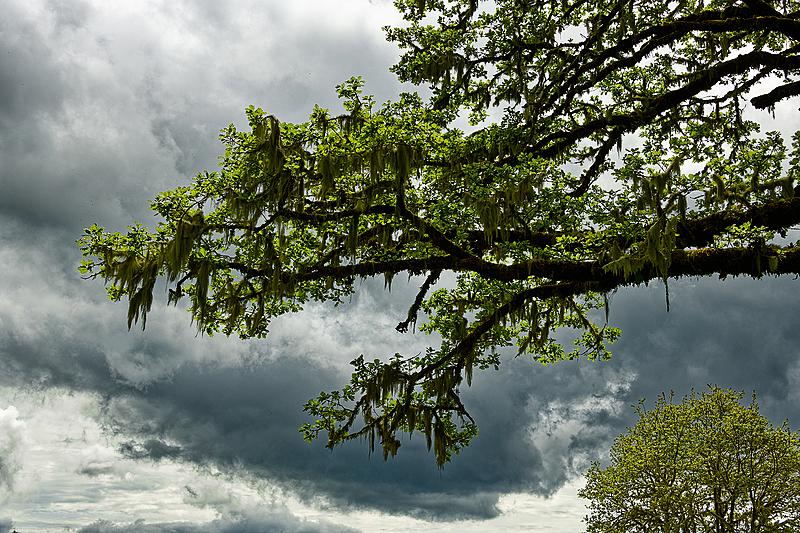 """Tree Art"""