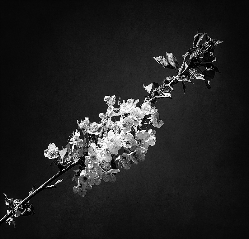 """""""Circle Blossoms w/Alchemy Texture, BW"""""""