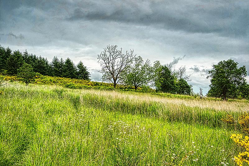 """Ridge Top (Scotch Broom Season)"