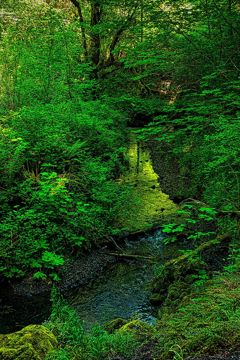 """""""Bathed in Green (Oak Ck.)"""""""