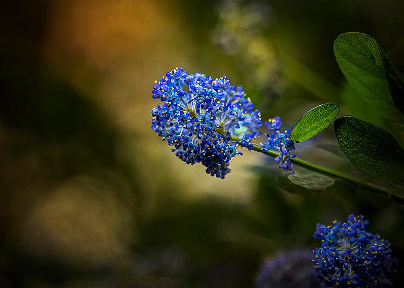 """""""Neighbor's Blue Flower"""""""