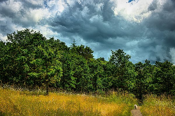 """Entering the Timberhill Natural Area, Painterly"""