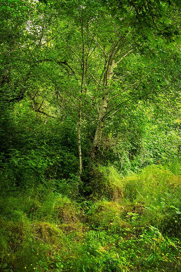 """Mixed Vegetation (Oak Ck Area)"""