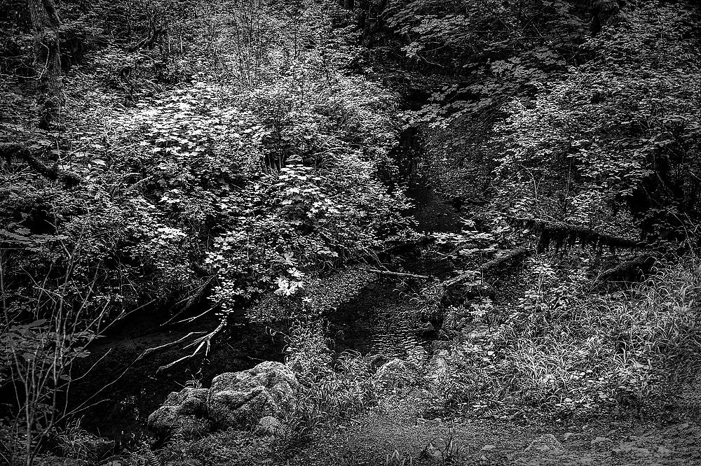 """""""Horizontal View of Oak Creek BW"""""""