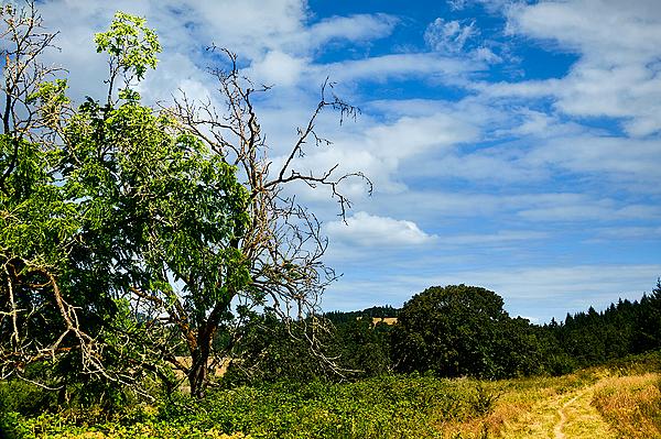 """""""Big Trees Ahead"""""""