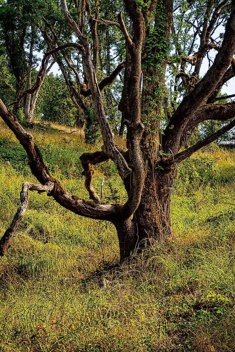 """Interesting Tree"""