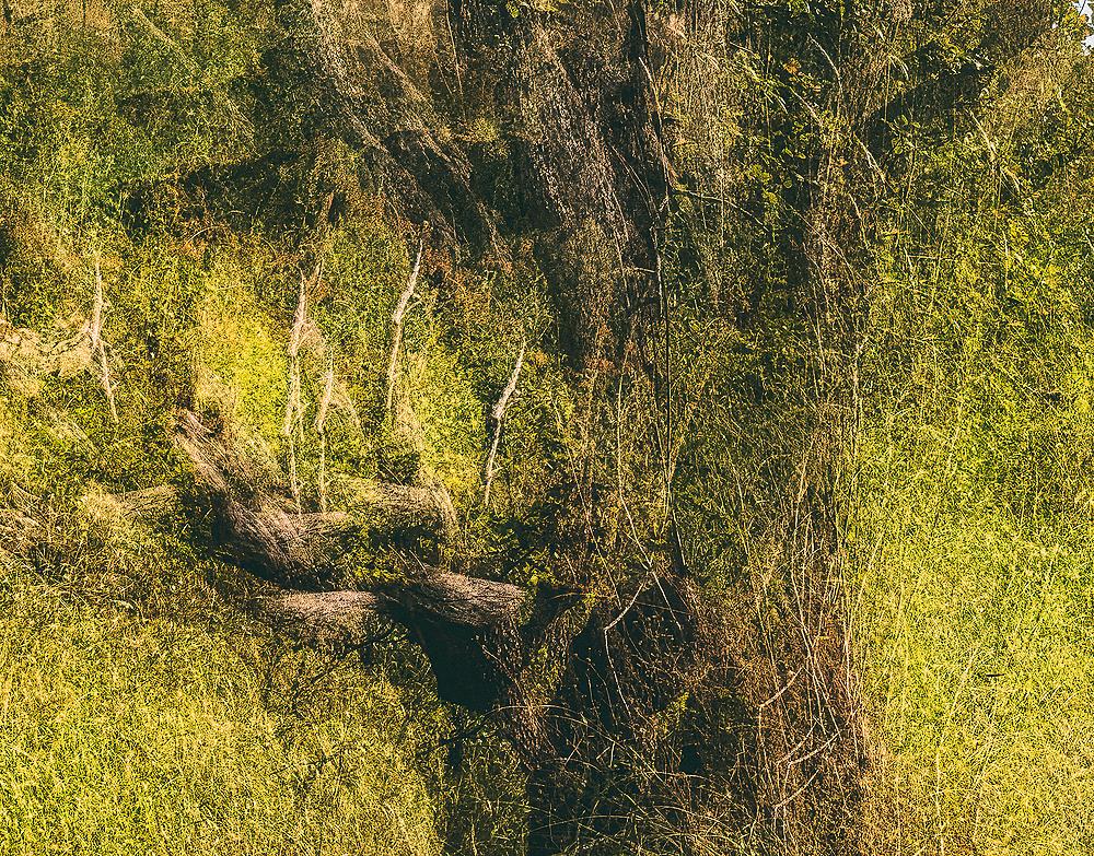 """Impressionistic Wabi Tree"""