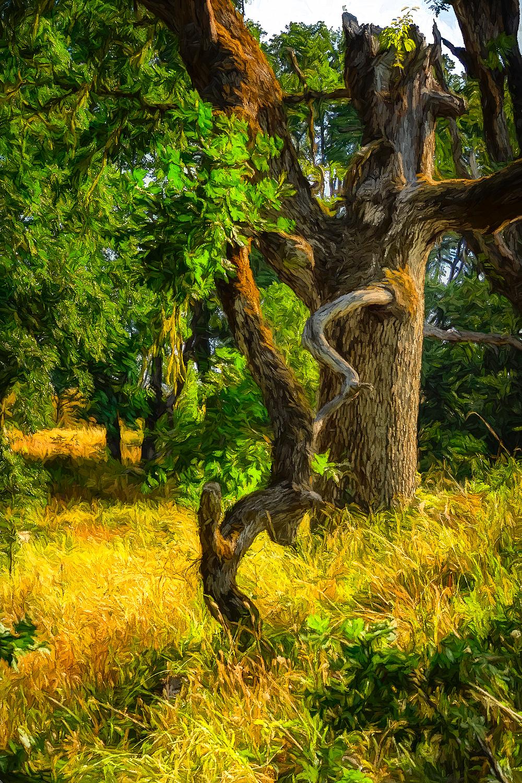 """Terrific Wabi Tree, Painterly"""