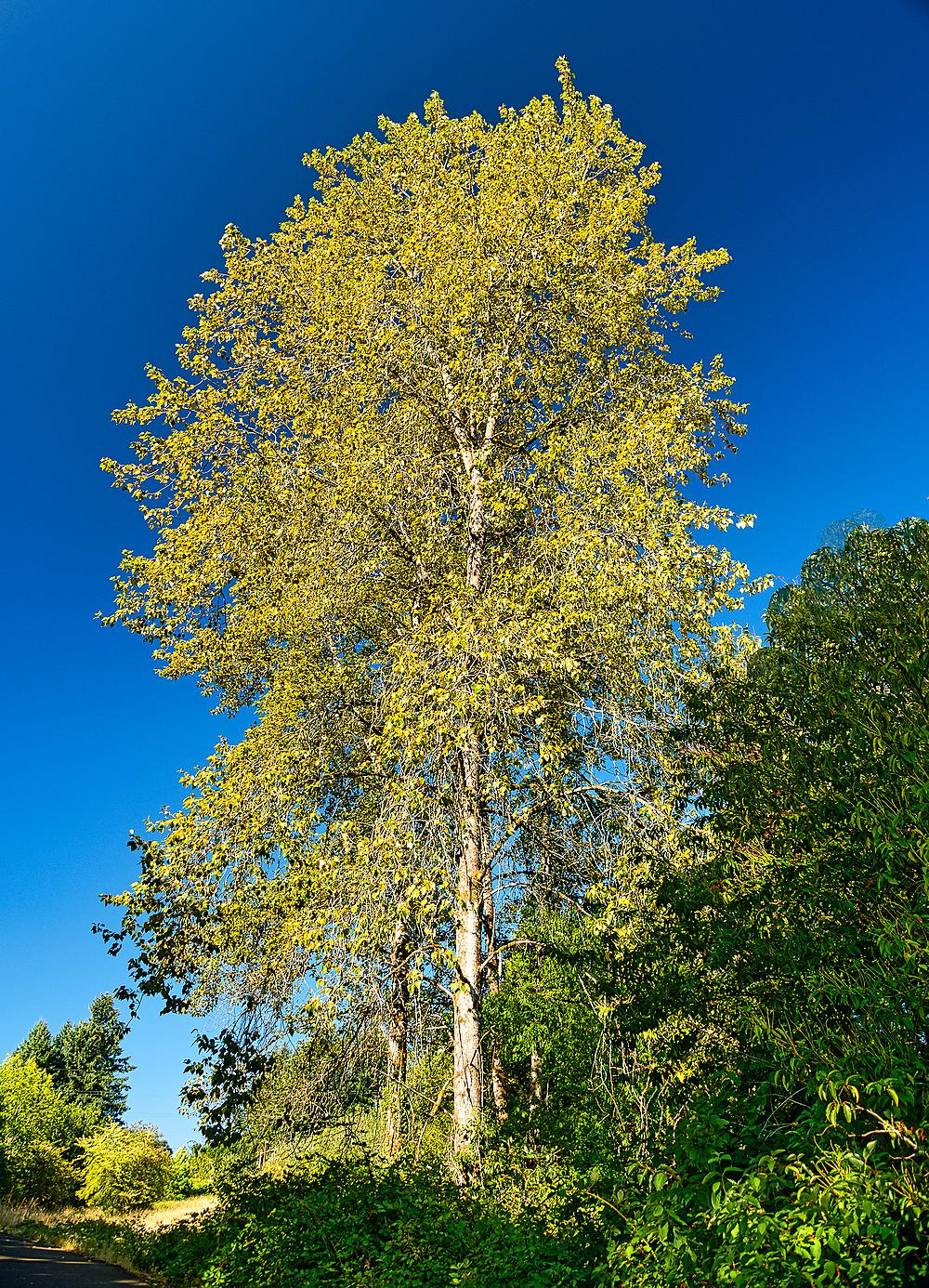 """""""Tall Circle Trees"""""""