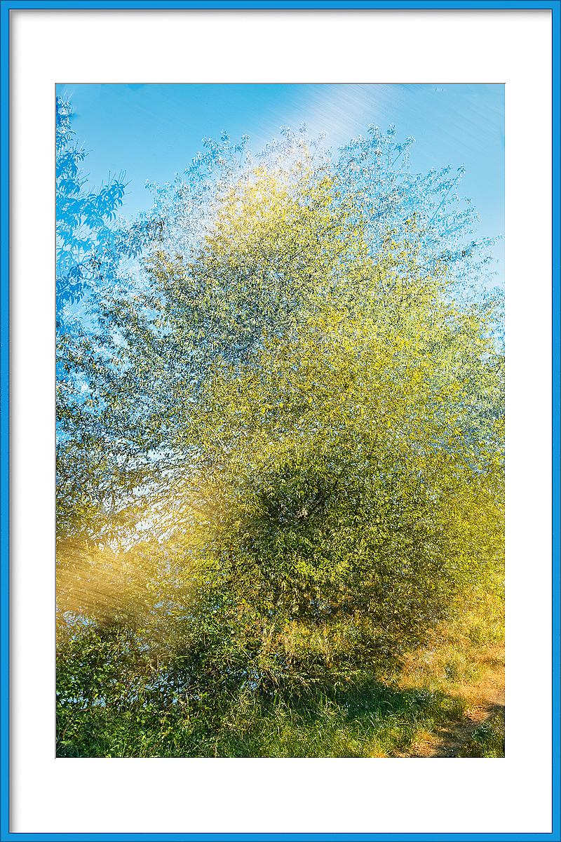 Multiple Exposure of Yesterday's Tree