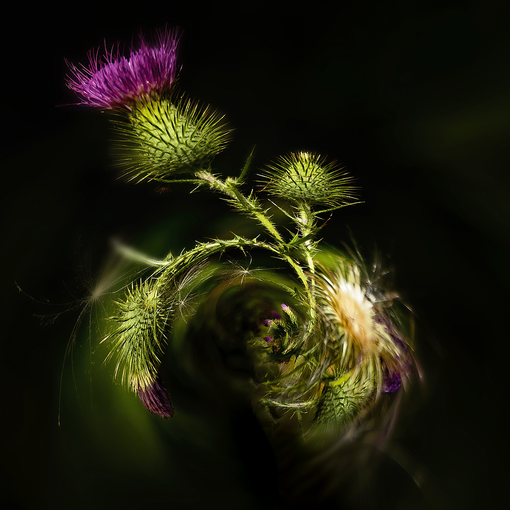 """Gentle Abstract of Riverside Thistle"""