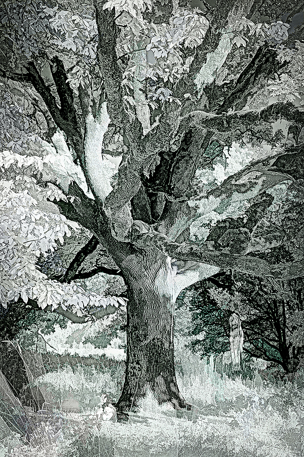 """""""IR Wabi Tree w/Line&Ink Look"""""""
