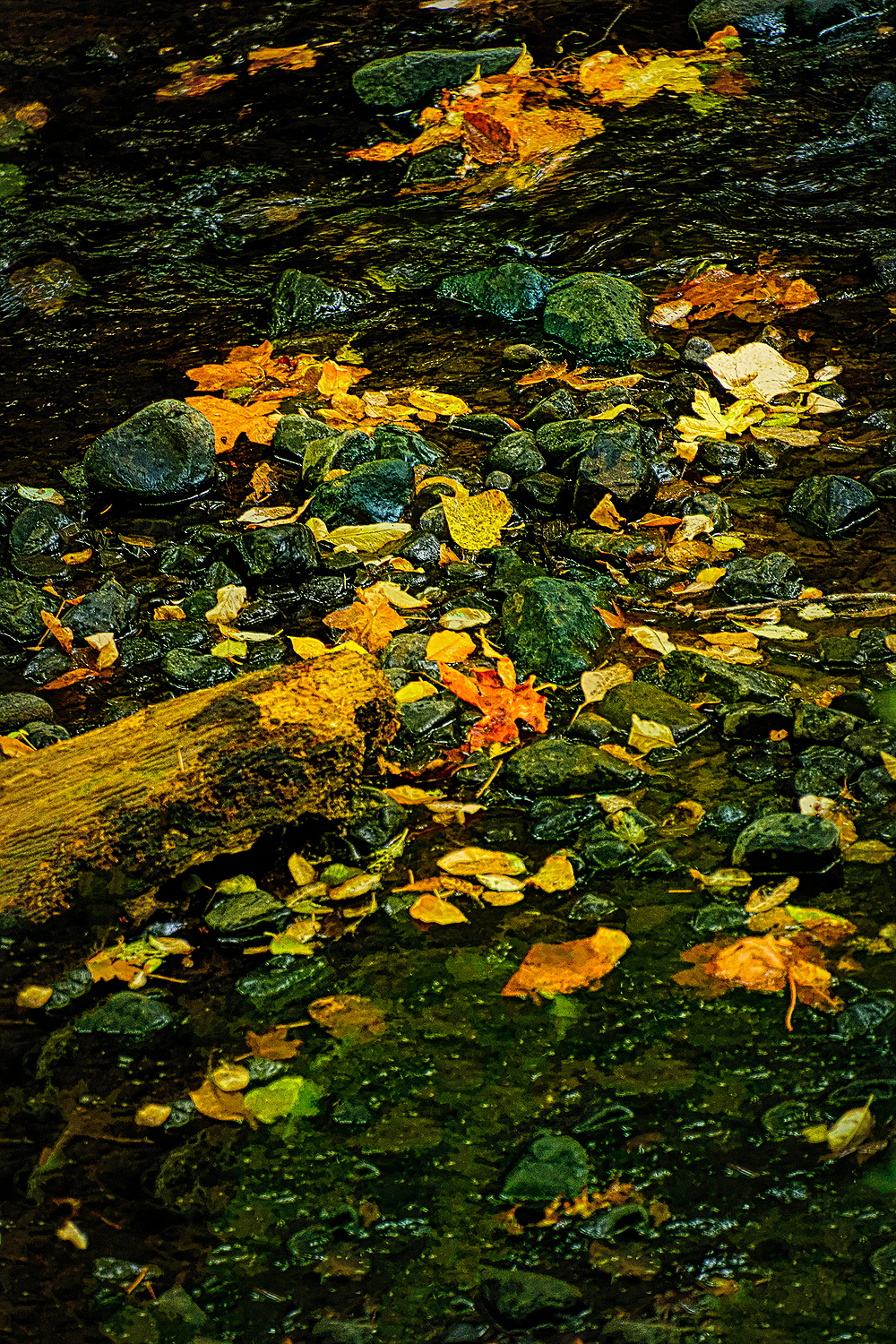 """Rocks & Leaves Edge of Oak Creek, Painterly"""