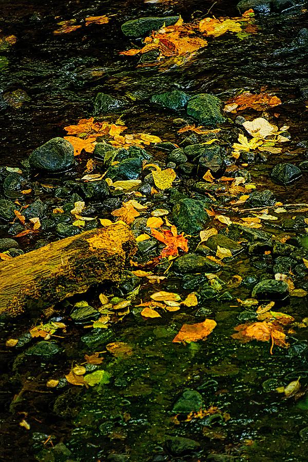 """Rocks & Leaves Edge of Oak Creek, Painterly"""