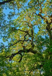 """Wonderful Wabi, Witham Hill Natural Park"""