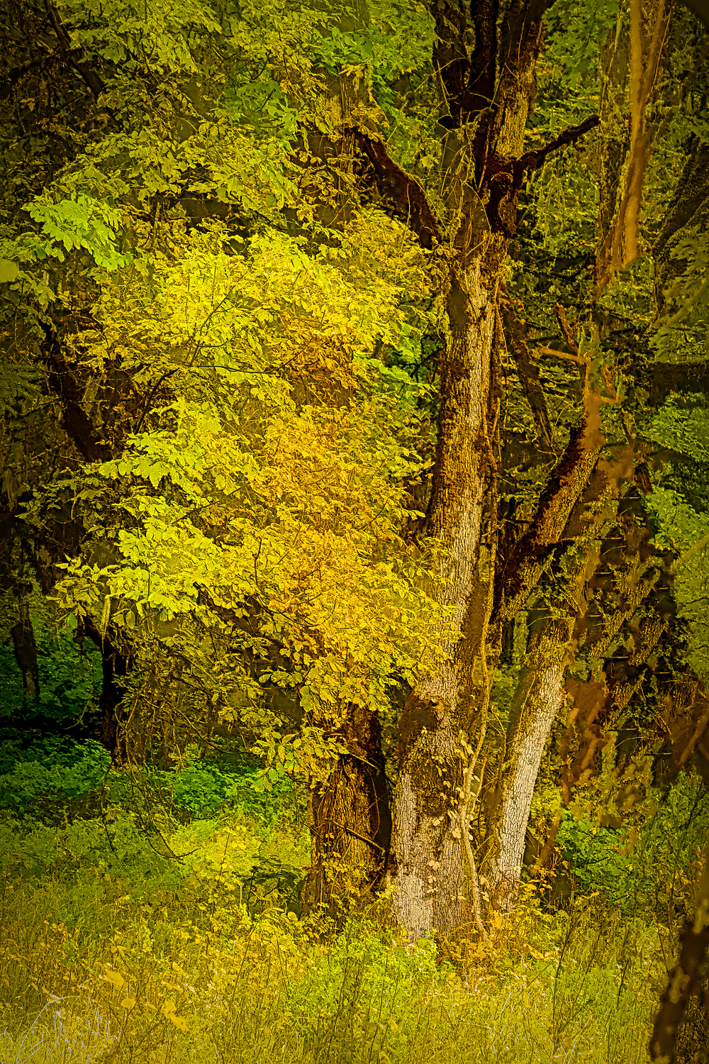 """""""Forest Color, Painterly (Line & Ink)"""""""