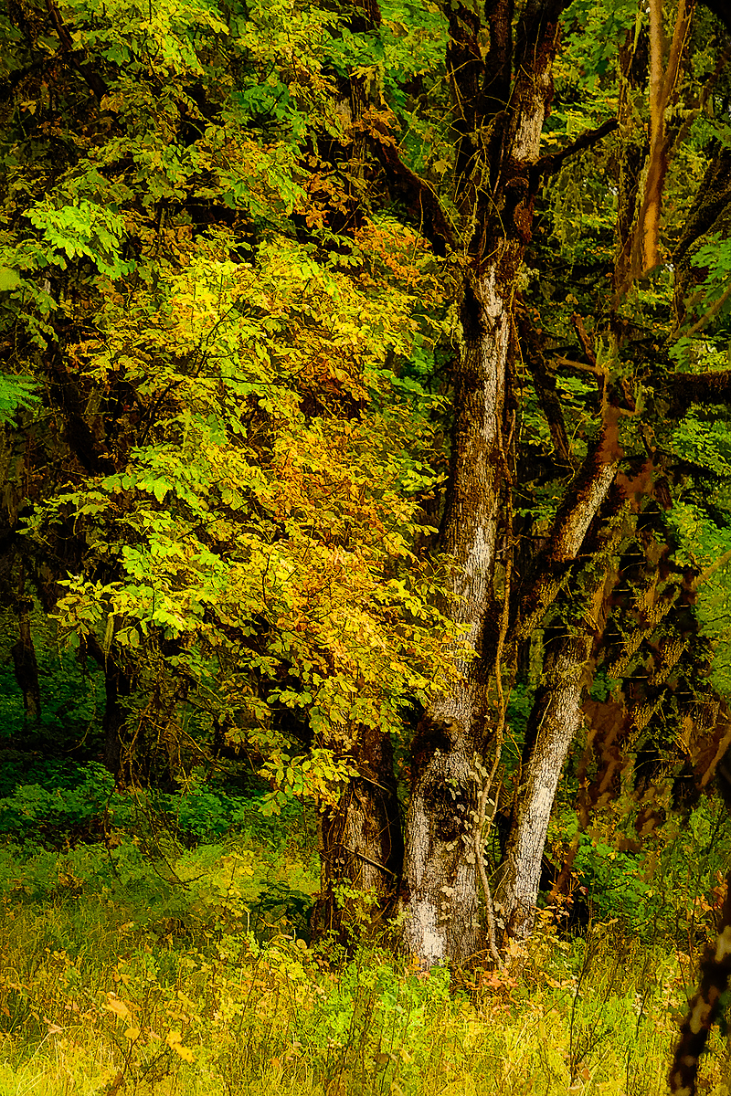 """""""Forest Color, Oil Painting"""""""