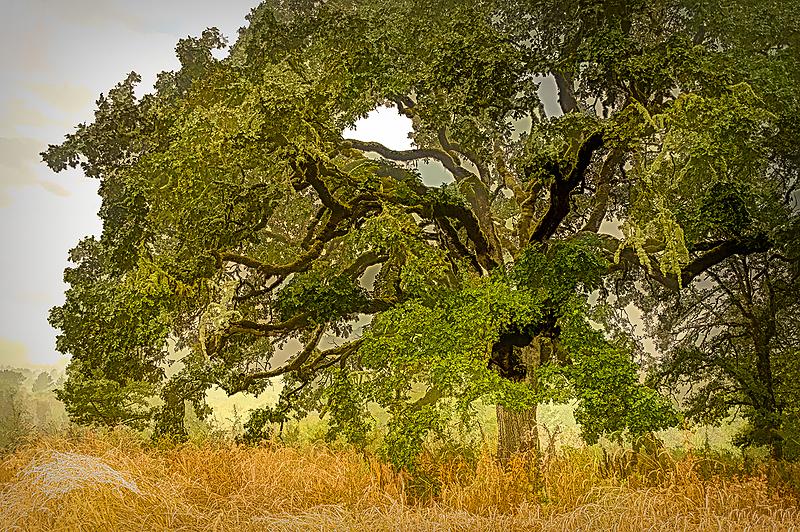 """Big Tree in Fog, Painterly (Line & Ink)"""