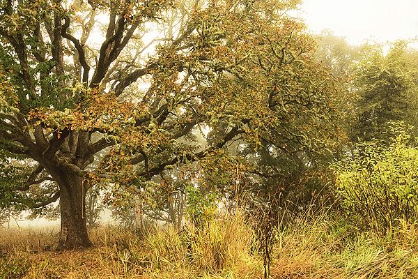 """""""Climbing Tree in Fog"""""""