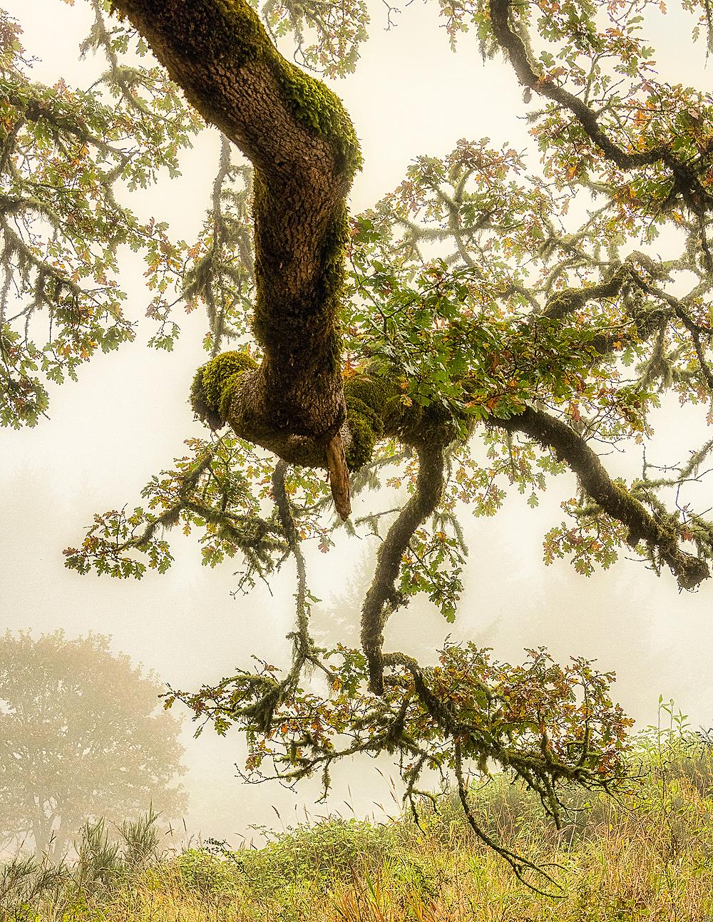 """Foggy Morning"""