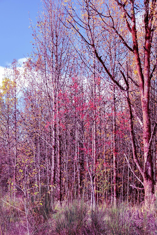 """""""Autumn Along Harrison, Painterly"""""""