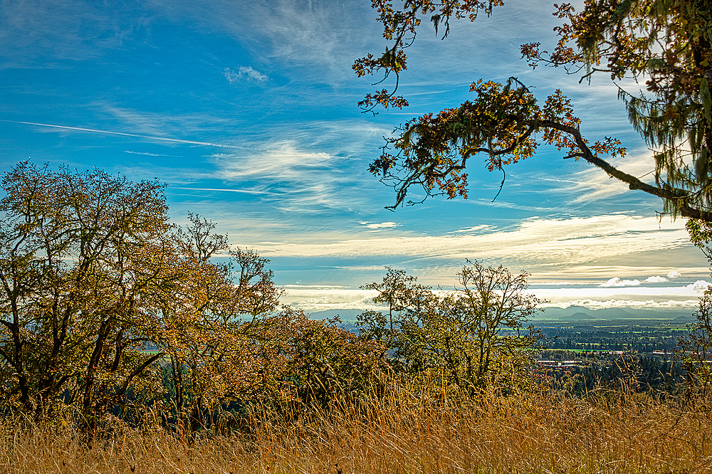 """""""Chip Ross View of the Valley"""""""