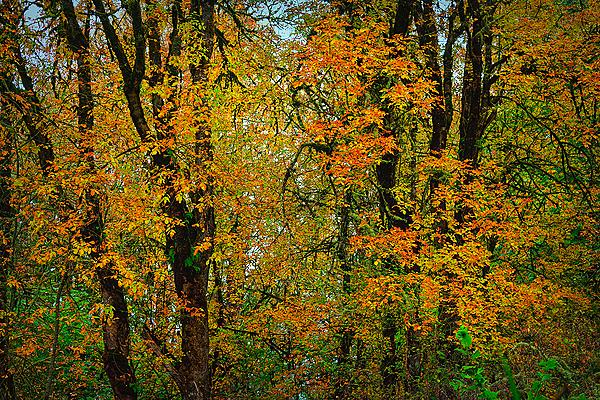 """""""Autumn Display"""""""