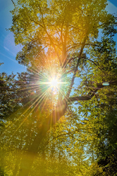 """""""Oak Creek Sunburst Inside Flare"""""""