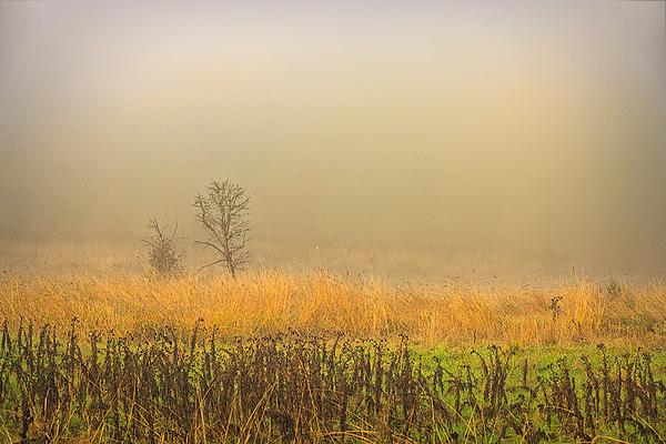 """Dense Fog"""