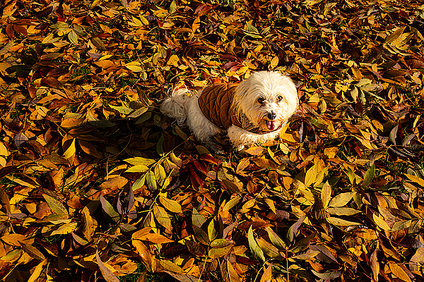 """""""In the Leaves"""""""