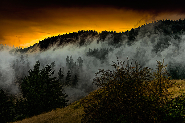 """Clouds Thru Mountain Trees"""