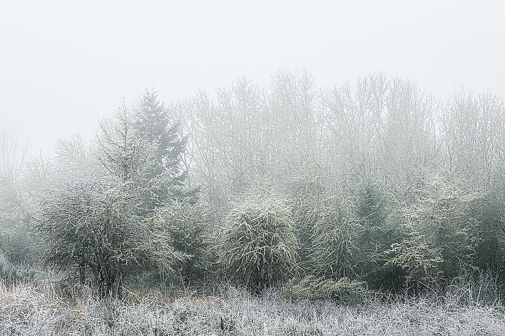 """Frozen Fog"""