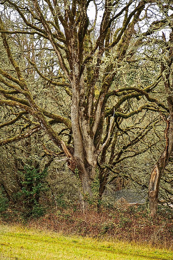 """""""Super Wabi Tree"""""""