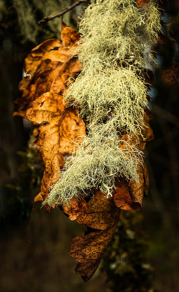 """""""Winter Leaves & Lichen"""""""