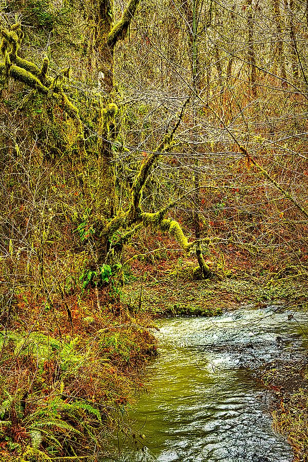 """""""Oak Creek in Winter #2"""""""
