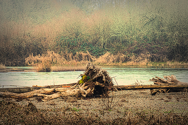 """Uprooted Tree (in the middle of the river)"""