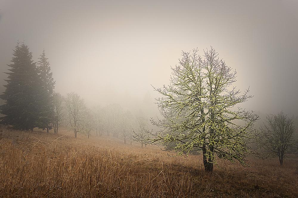 """Fantastic Fitton Fog"""