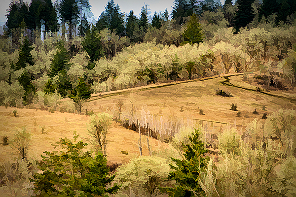 """""""Timberhill Natural Area, Painterly from Big Trees"""