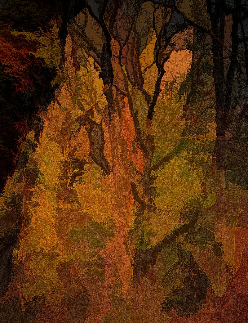 """""""Wild Wabi Abstract"""""""