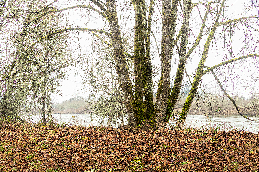 """Along the River (a little fog)"""