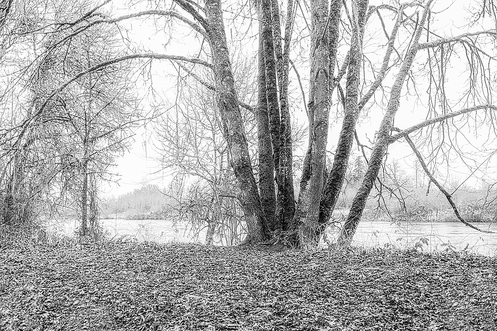 """Along the River (a little fog)""  BW"