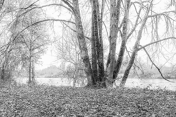 """Along the River (a little fog)""  BW"