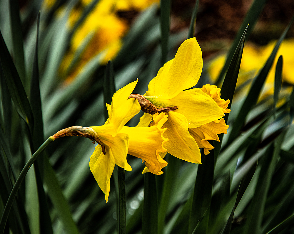 """""""Icon of Spring"""""""