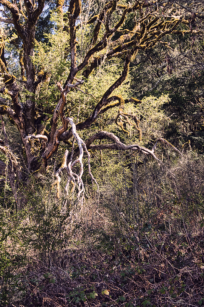 """The Tendril Tree (Seattle Mood)"""