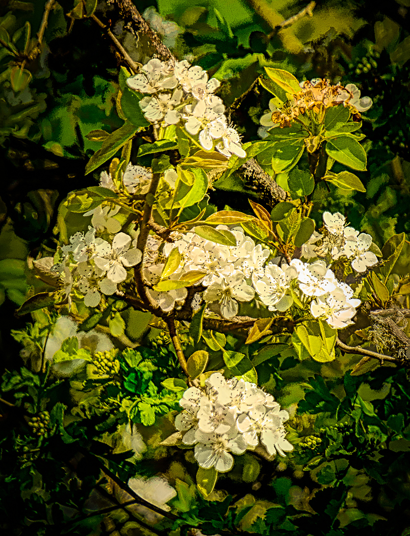 """""""Painterly Posies Along Betty Griffiths Trail"""""""