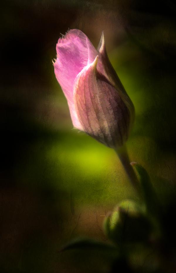 """""""Tiny Beauty"""""""