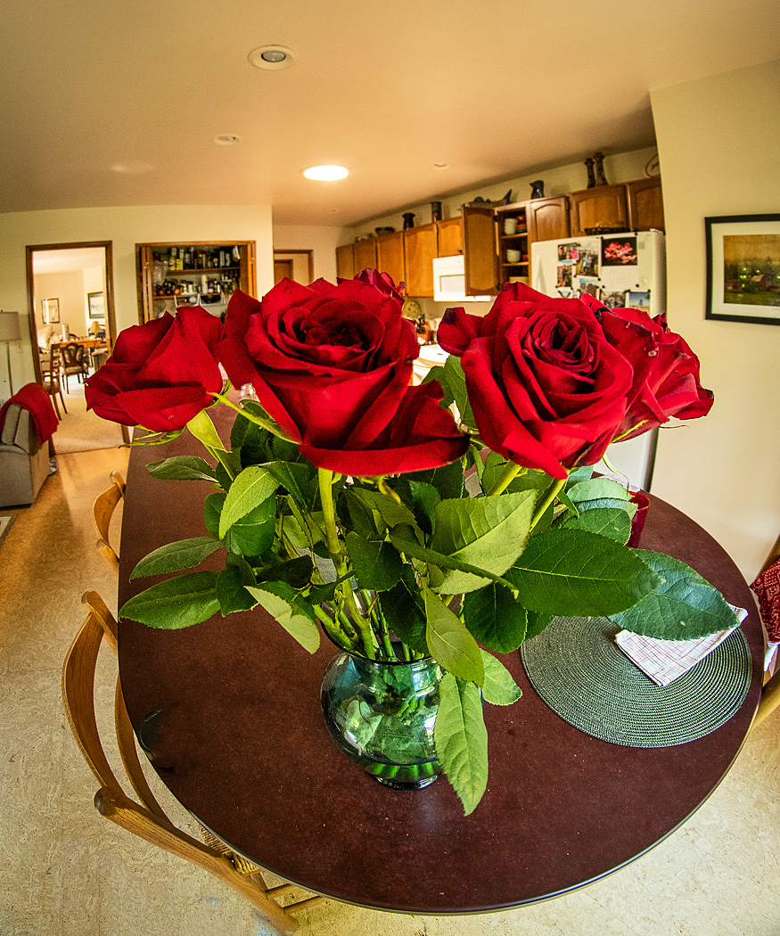 """""""Fisheye View of Mothers' Day Roses"""""""