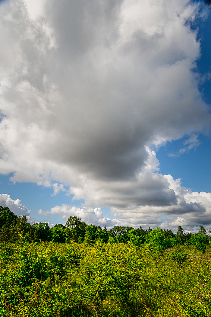"""""""Tunnel Clouds Over Wetlands"""""""