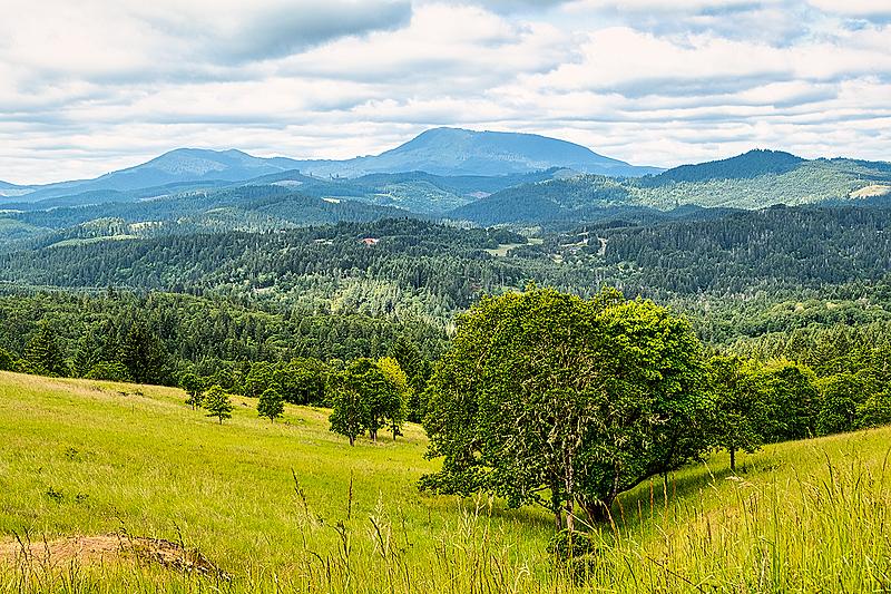 """Gully & Marys Peak""   -  Horizontal"
