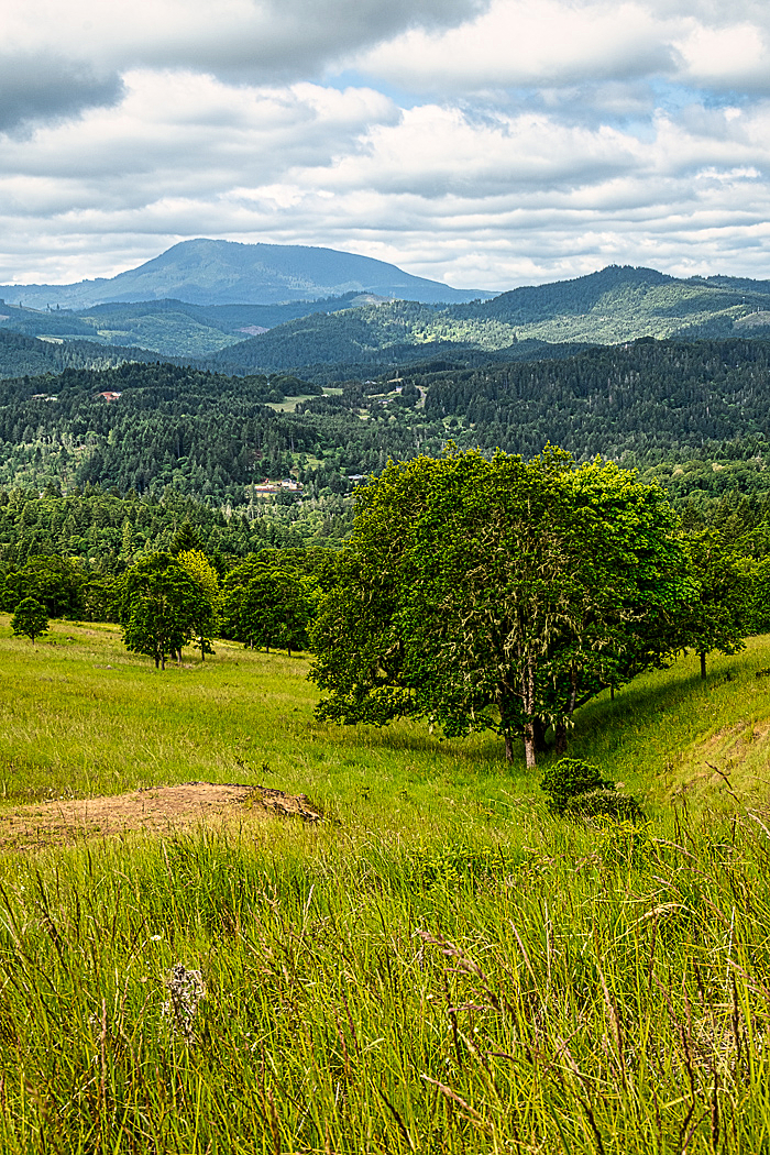 """Gully & Marys Peak""  - Vertical"